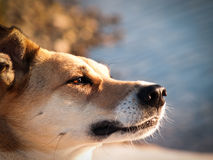 Dog 244. Dop portrait at the sea 244 Stock Photography