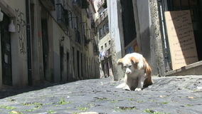 Dog in downtown Lisbon, Portugal. Dog in an alley in downtown Lisbon, Portugal stock video