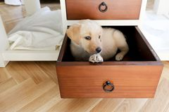 a dog in a drawer stock photo