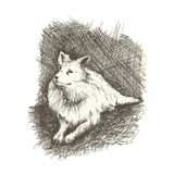 Dog drawn engraving style by pen, retro hound Royalty Free Stock Photo