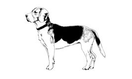 Dog drawn with ink on white background stock images