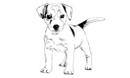 Dog drawn with ink on white background Stock Photo