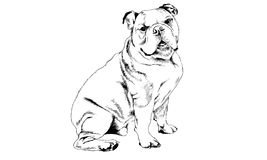 Dog drawn with ink on white background Royalty Free Stock Photos