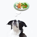Dog dreaming about food Stock Image
