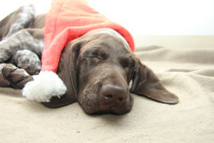 Dog dreaming of Santa Stock Photos