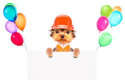 Dog  dressed as builder with banner Royalty Free Stock Images
