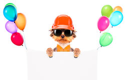 Dog  dressed as builder with banner Stock Photos