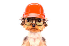 Dog  dressed as builder Royalty Free Stock Images