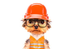 Dog  dressed as builder Stock Photography