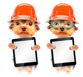 Dog  dressed as builder with tablet pc Stock Photo