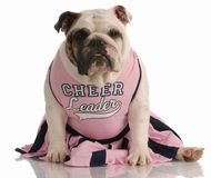 Dog dressed as a cheerleader Royalty Free Stock Images