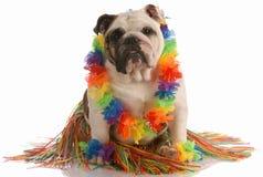 Dog dressed as a hula dancer