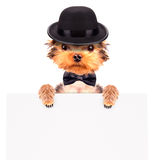 Dog dressed as mafia gangster with banner Stock Image