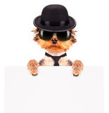 Dog dressed as mafia gangster with banner Royalty Free Stock Photos
