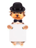 Dog dressed as mafia gangster with banner Stock Photo