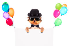 Dog dressed as mafia gangster with banner Royalty Free Stock Photo