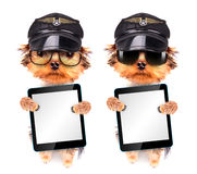 Dog dressed as pilot with tablet pc. Dog dressed as pilot holding blank tablet pc stock photography