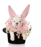 Dog dressed as a rabbit Stock Photography