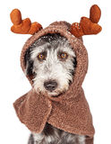 Dog Dressed as Reindeer With Snow Royalty Free Stock Photos