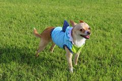 Dog Dressed as Shark Royalty Free Stock Images