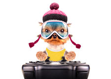 Dog  dressed as skier play on game pad Royalty Free Stock Photos