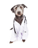 Dog Dressed As Veterinarian Royalty Free Stock Images