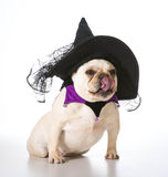 Dog dressed as a witch Stock Photo