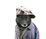 Dog in casual dress Stock Photo