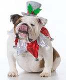 Dog dressed for christmas Stock Photography