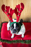 Dog dressed for Christmas Royalty Free Stock Photos