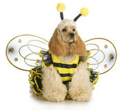 Dog dressed like a bee Royalty Free Stock Photos