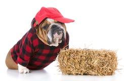 Dog dressed like a farmer Royalty Free Stock Photography