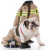 Dog dressed like a firefighter Stock Images