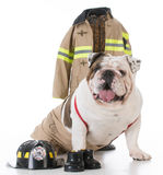 Dog dressed like a firefighter Royalty Free Stock Photography