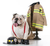 Dog dressed like a firefighter Royalty Free Stock Image