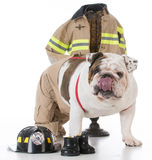 Dog dressed like a firefighter Royalty Free Stock Photo