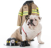 Dog dressed like firefighter Royalty Free Stock Images