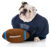 Dog dressed like a football player Royalty Free Stock Photography