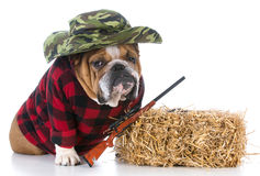 dog dressed like a hunting dog Stock Images