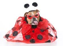 Dog dressed like a ladybug Royalty Free Stock Photos