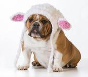 Dog dressed like a lamb Stock Image