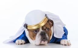dog dressed like a sheik Royalty Free Stock Photo