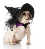 Dog dressed like a witch Stock Photo