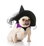 Dog dressed like a witch Royalty Free Stock Photo