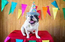 Dog dressed for party Royalty Free Stock Images