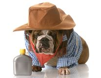 Dog dressed up as a cowboy Stock Images
