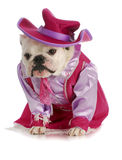 Dog dressed up as cowgirl Royalty Free Stock Photo