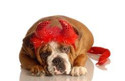 Dog dressed up as devil Stock Images