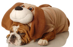 Dog dressed up as a dog Stock Images