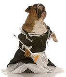 Dog dressed up as a maid Stock Photos